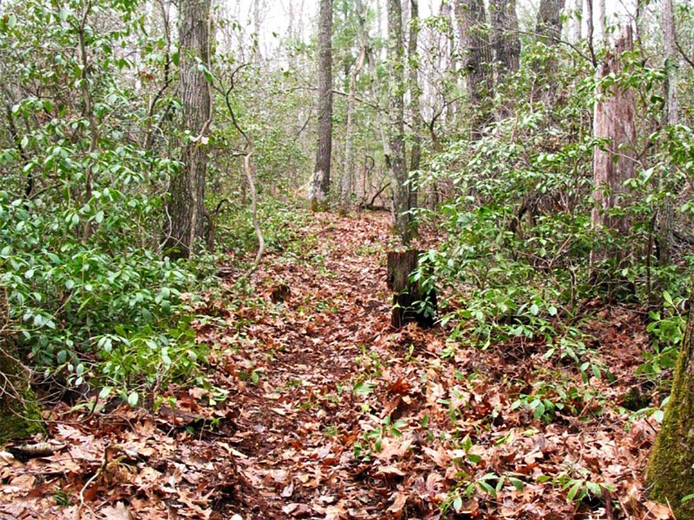 Boothroyd trail
