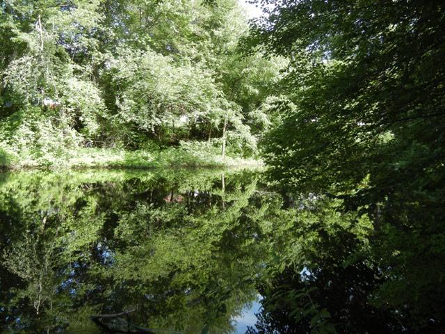 Ecker's Pond Trail