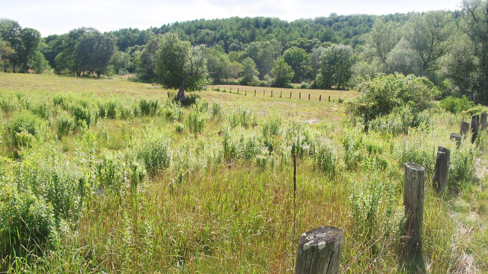 Satkowski Pasture
