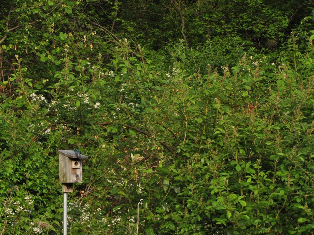 Valley Falls bird boxes